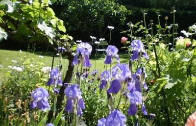 la-maison-du-sart--jardin