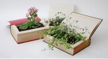 musee-du-terroir-fleurs-livres