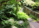 sentier-du-chimonobambusa